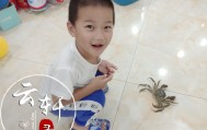 第一次近距离观察螃蟹,云轩表现得又惊奇又害怕