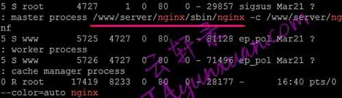 查看nginx文件路径.jpg