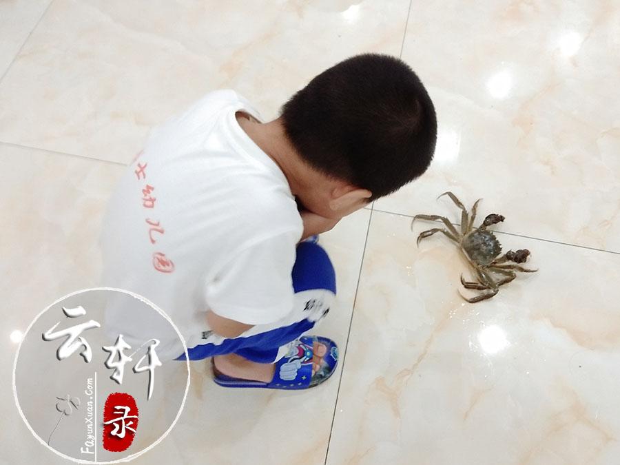 第一次近距离观察螃蟹,云轩表现得又惊奇又害怕2.jpg