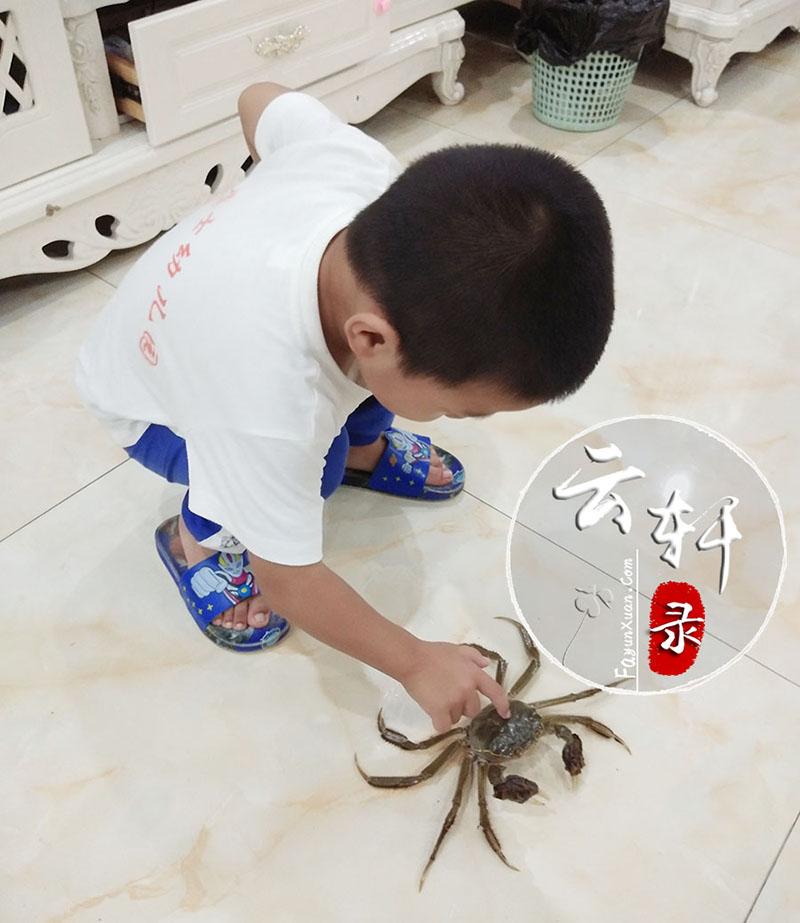 第一次近距离观察螃蟹,云轩表现得又惊奇又害怕 (2).jpg